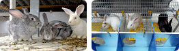 Gasification of the rabbit shed for moderate price