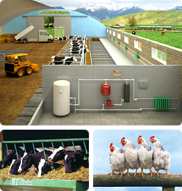 Gasification of cattle farms